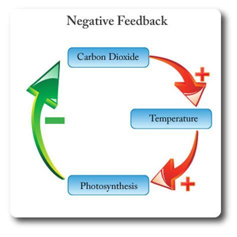 Environmental Science Coursepapercom